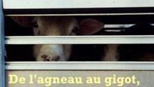 De l'agneau au gigot