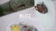 BUZZ Parasitic Ecologies