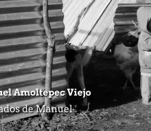Los olvidados de Manuel