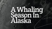 A Whaling Season in Alaska